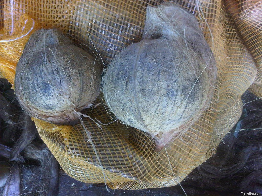 Fresh Mature Coconut