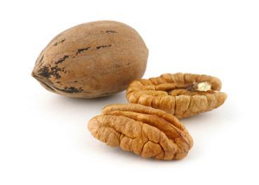 Pecan nut shell
