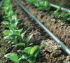 Drip Irrigation Pipes