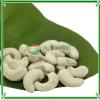 Cashew Nuts Kernel WW450