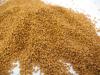 Camelina Sativa seeds